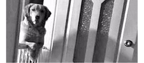 O cachorro na verdade estava com medo de ser abandonado novamente