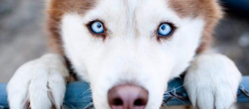 Cuidando dos nossos Pets, com base em um olhar bíblico.