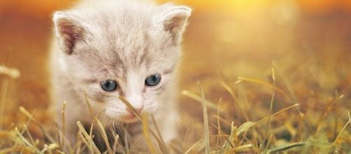 Gatti | animali . - quinewsanimali.it