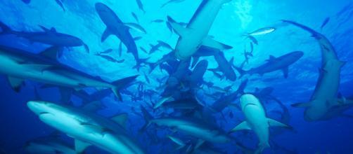 ¡Sos! Los ecosistemas marinos en peligro