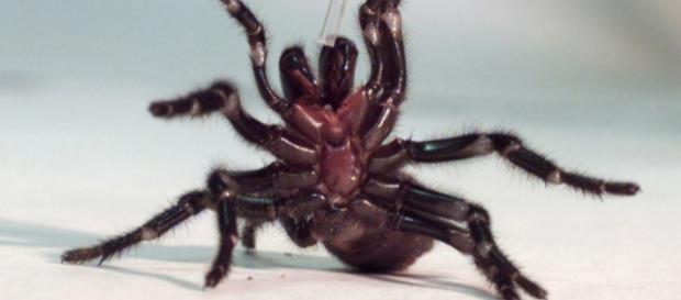 Giftspinnenplage im Dschungelcamp ... - sueddeutsche.de