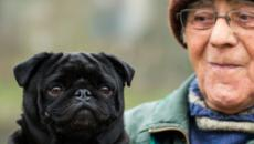 Dog owners less likely to die from cardiovascular diseases, study finds