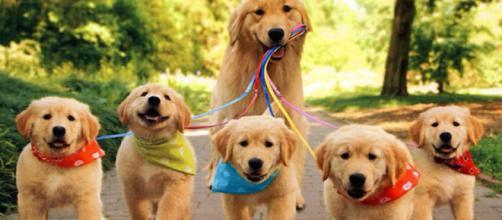 Cães são benéficos para a saúde de seus donos, aponta pesquisa