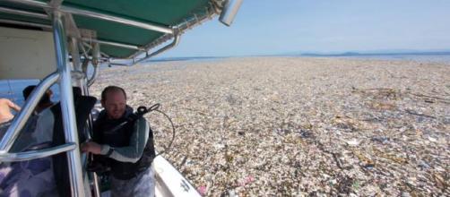 Mar de lixo no Caribe: a fotógrafa e ativista Caroline Power mostra a situação