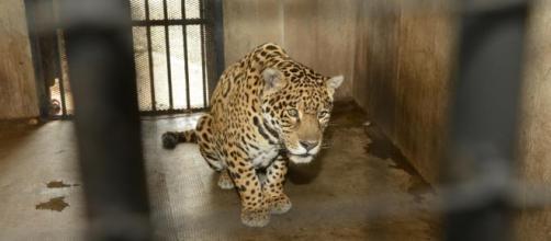 Recogida de firmas para evitar esta crueldad animal en Alfafar, Valencia