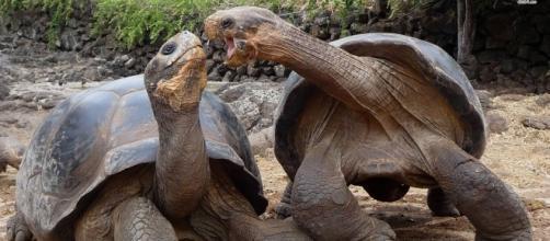Tortuga Aldara Gigante, animales más longevos del mundo