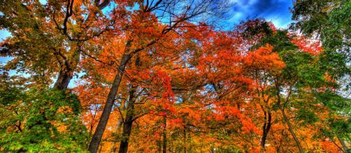 Autumn picuture-Paul Bica via flickr