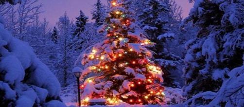 La tradizione dell'albero di Natale | News | Grechi Giardini - grechigiardini.it