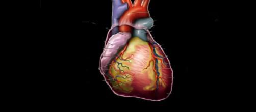 Human Heart - Image Source - Khan Academy | Wikimedia