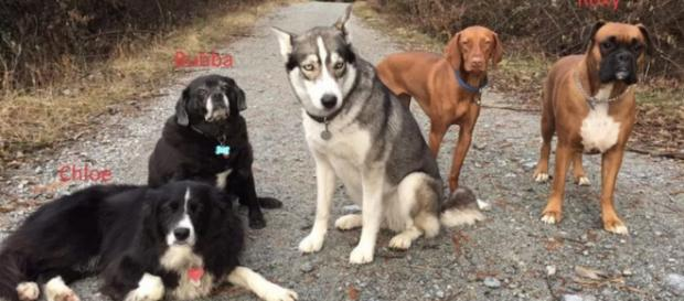 A Canadian dog walker survived almost three days in the wilderness, thanks to her dogs [Image credit: Coquitlam Search and Rescue]