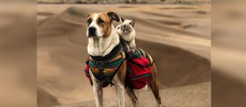 Henry and Baloo the traveling dog and cat duo