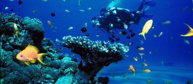 Coral reefs (Image credit – Jeaaanm, Wikimedia Commons)