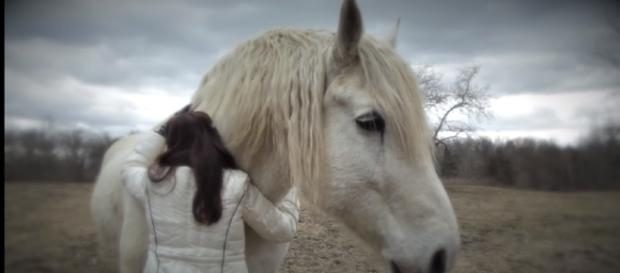 Horses are used in therapy to help people overcome fear and anxiety [LienMedia/Youtube Screencap]