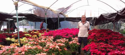 Don Filomeno muestra algunas de las variedades que producen en Viveros Santa Inés (Adrián Jiménez)
