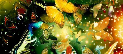 """""""El aleteo de las alas de una mariposa se puede sentir en el otro lado del mundo"""""""