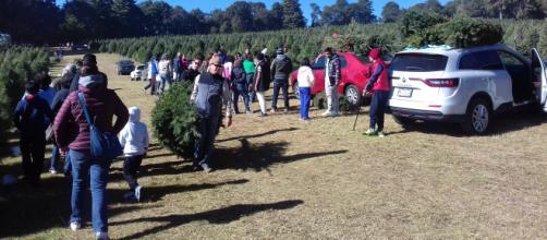 Familias enteras cortan su árbol de Navidad en Amecameca (Adrián Jiménez)