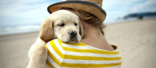 Oltre metà degli italiani vuole cani e gatti con sé in vacanza ... - lasicilia.it