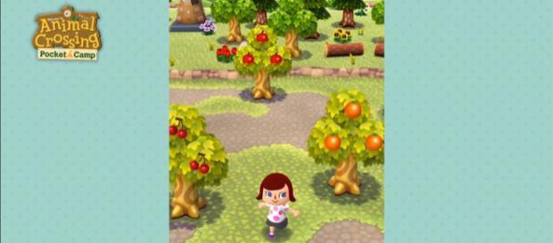 Animal Crossing: Pocket Camp tips (Nintendo Mobile/YouTube)
