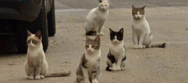 Gato de rua é suspeito de tentativa de homicídio.