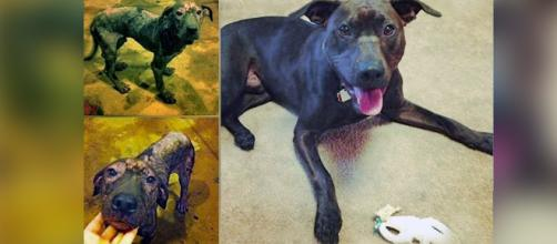 Amazing before and after pics of rescue dogs. Image Credit: Own work