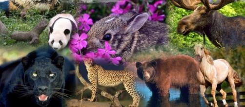 Los animales más increíbles que se encuentran en peligro de desaparecer del Planeta.