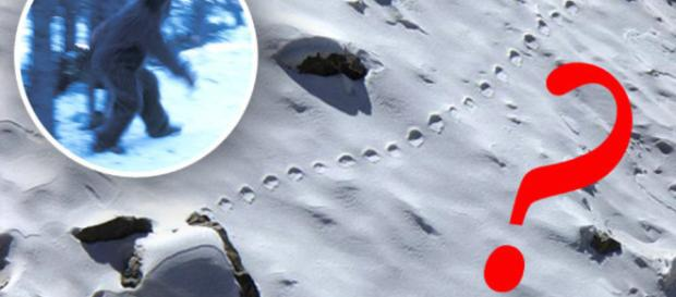 Yeti footprints photographed in snow in Bhutan | Daily Star - dailystar.co.uk