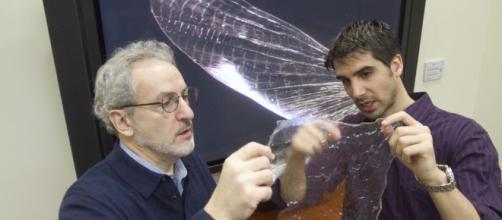 El caparazón de artrópodos para la producción de bioplástico