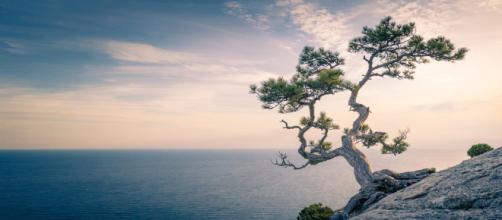 Mindfulness, la strada verso la felicità – Il Giornale dello Yoga - ilgiornaledelloyoga.it