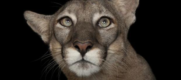 Joel Sartore: The man who takes studio photos of endangered ... - bbc.com