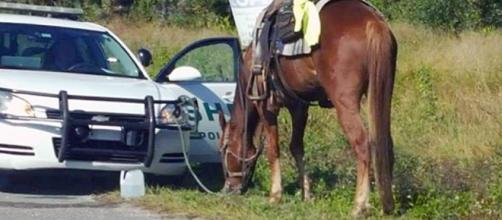 A woman was arrested for riding a horse while drunk [Image credit: Polk County Sheriff's Office]