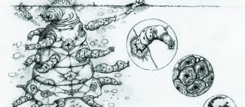Rappresentazione di un'ipotesi di struttura aliena a cura di Helen S.Cooper-www.media.inaf.it