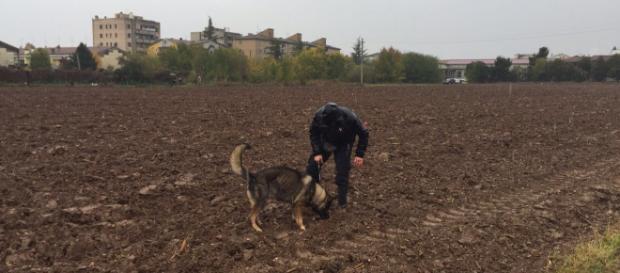 Le unità cinofile dei Carabinieri setacciano il campo a Villafranca di Verona, in cui sono stati rinvenuti resti umani il 31 ottobre scorso.