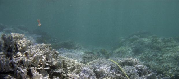Papahānaumokuākea Marine National Monument via Flickr