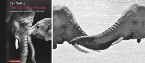 Mentes maravillosas. Lo que piensan y sienten los animales, de ... - posdatamx.com