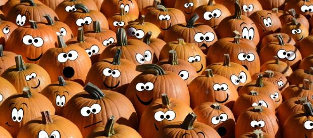 A Canadian animal shelter benefited from 300 post-Halloween pumpkins for their residents. [Image credit: Pixabay/CC0]