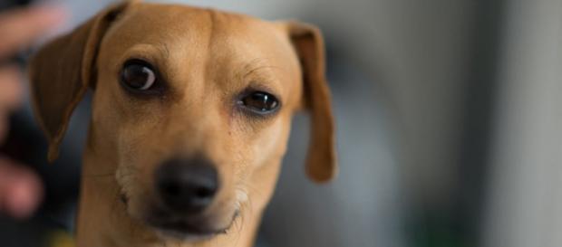 A avaliação dos cães sobre as pessoas está ligada a observação
