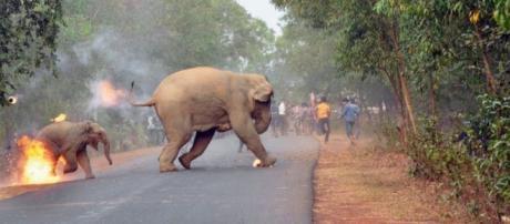 Elefantes fogem da multidão ensandecida que ateou fogo nos animais (Foto: Biplab Hazra/Sanctuary Wildlife Photography Awards)