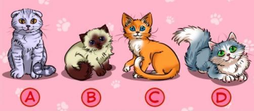 Escolha um gatinho e fique impressionado com os resultados (foto: Brasilkk.com)