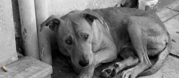 Premieră în România: ÎNCHISOARE pentru uciderea unui câine