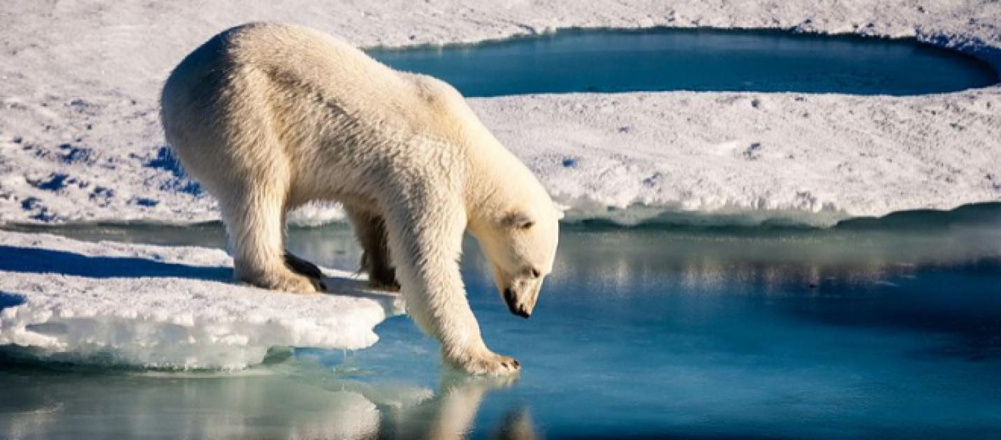a research on the polar bear the lord of the arctic This is a short video documentary on the magnificent animal the polar bear lord of the arctic - polar bear 9:40 growing up arctic polar bear.
