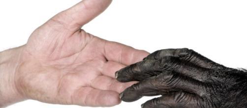 Moralmente, animales humanos como no humanos, son personas