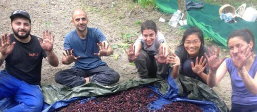 Nido di seta a San Floro in Calabria