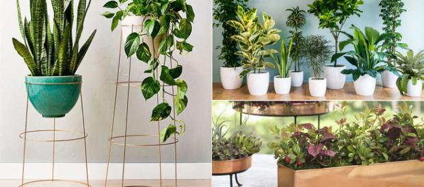 Houseplants can ofer a healthy benefits. Image Credit: Blasting News