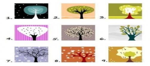 Escolha uma árvore e descubra sobre a personalidade.
