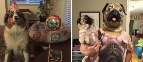 Estes cachorros têm medo das coisas mais inusitadas