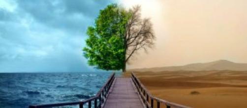 La importancia de conocer el medio ambiente   Ecología - facilisimo.com