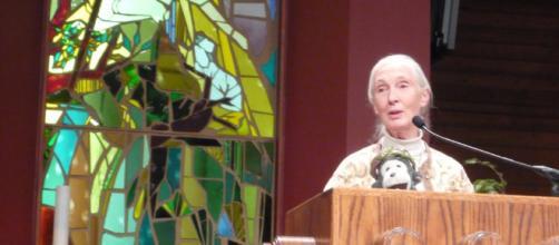 Jane Goodall viaja 300 días al año para enseñarnos que debemos proteger la diversidad de la vida