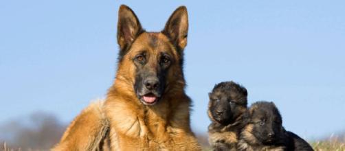 La storia di un cane specializzato in urologia