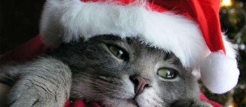 Sentir tristeza en Navidad es producto de las bajas temperaturas y las dinámicas sociales que nos invitan a compartir