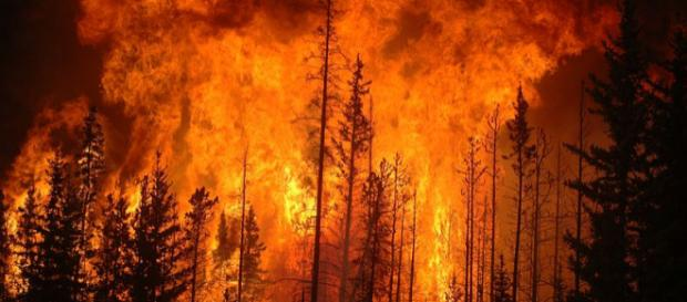 Forest fires (Image credit – Cameron Strandberg, Wikimedia Commons)